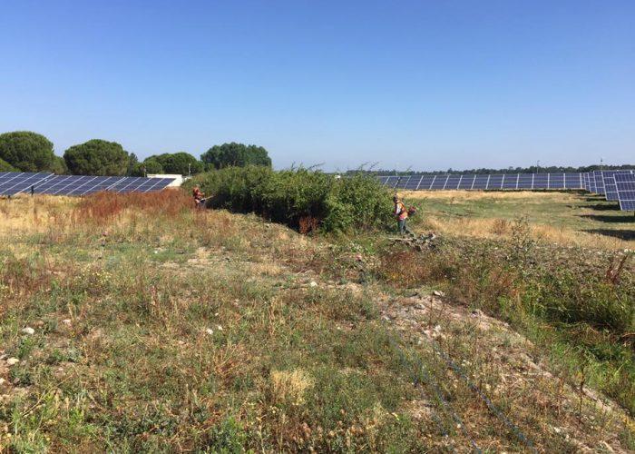 Parque-Fotovoltaico-Coruche (1)