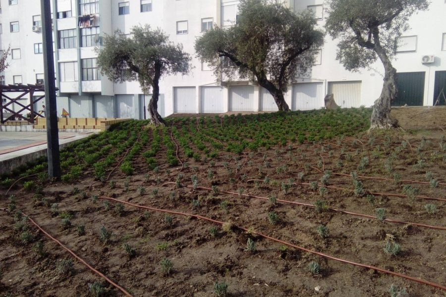 Rehabilitation Neighborhood of the Carapalha – Castelo Branco