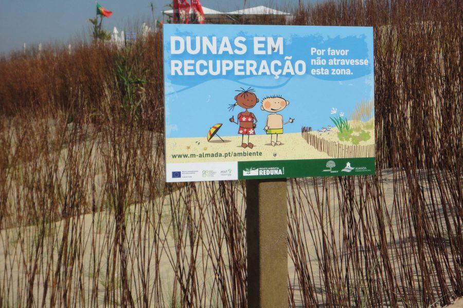 Réhabilitation de dunes (plage São Jorge)