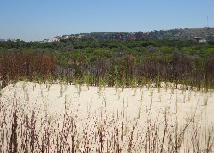 Recuperacao-de-Dunas-Praia-S-Joao (2)
