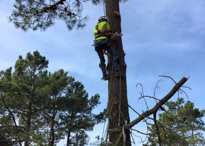arboricultura (11)