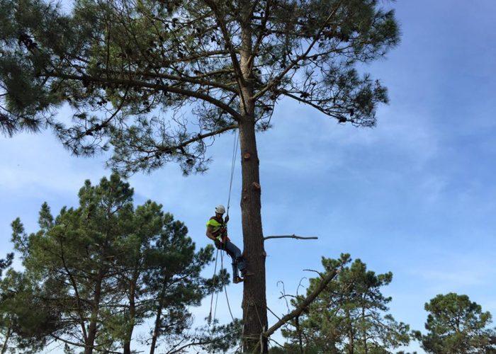 arboricultura (2)
