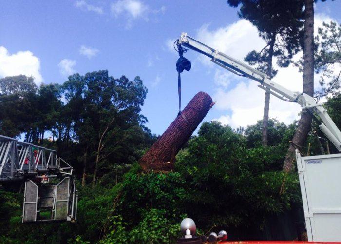 arboricultura (4)