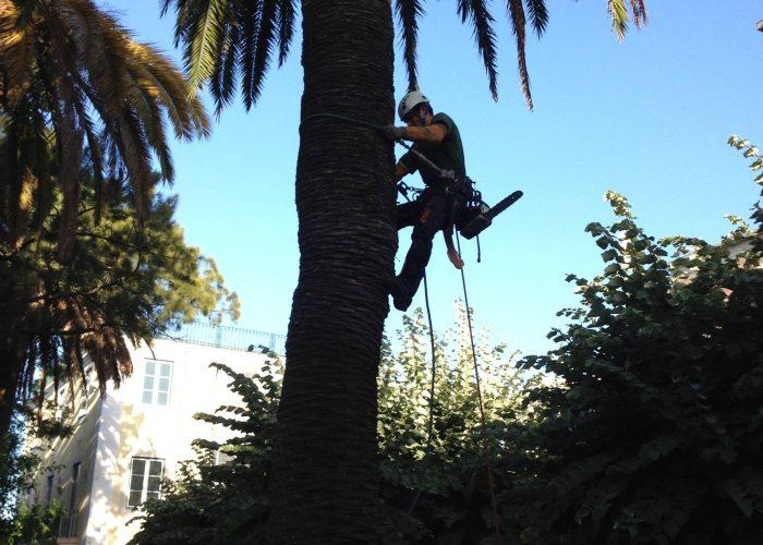 arboricultura (5)