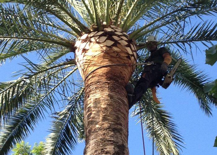 arboricultura (6)