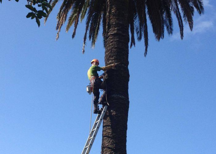 arboricultura (7)