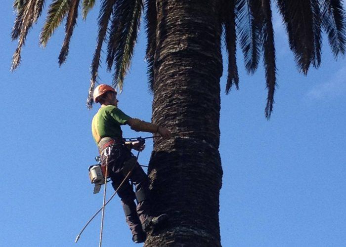 arboricultura (8)