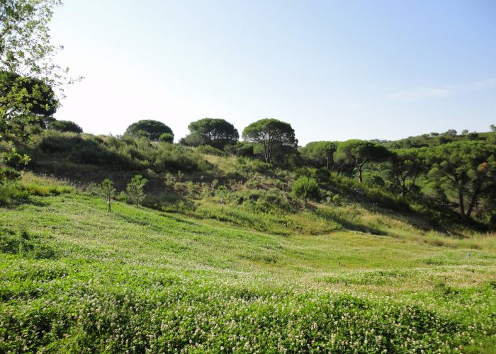 floresta (1)