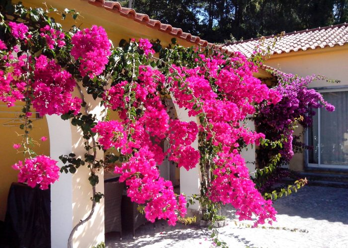 manutencao-de-jardins (15)