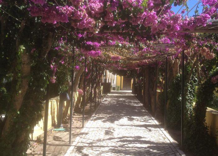manutencao-de-jardins (16)