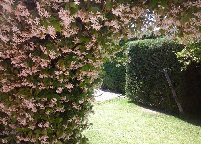 manutencao-de-jardins (3)