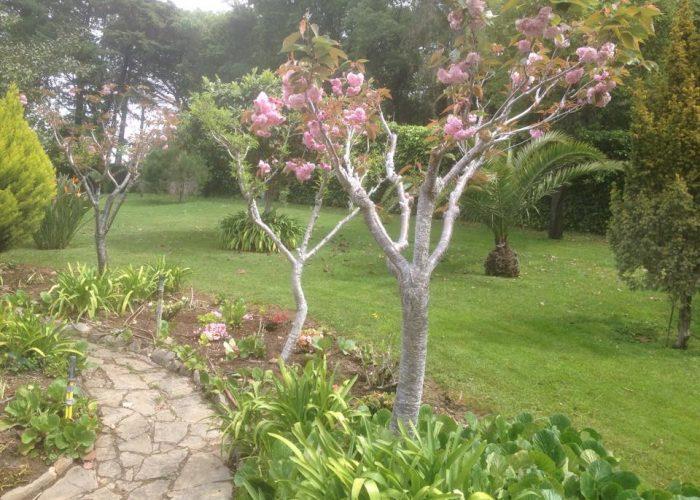 manutencao-de-jardins (37)