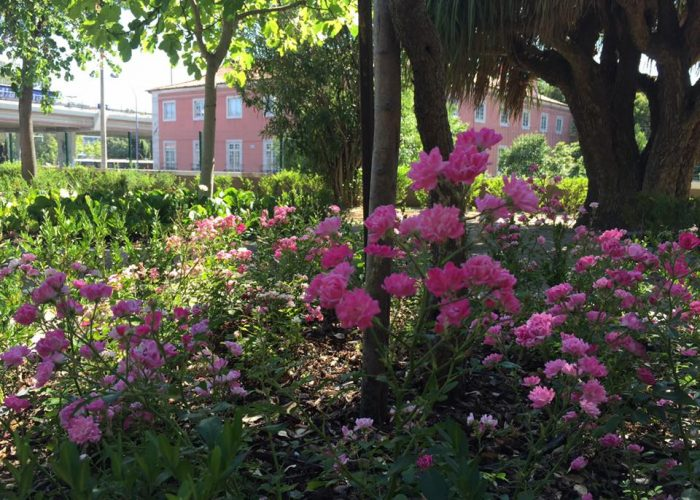 manutencao-de-jardins (5)