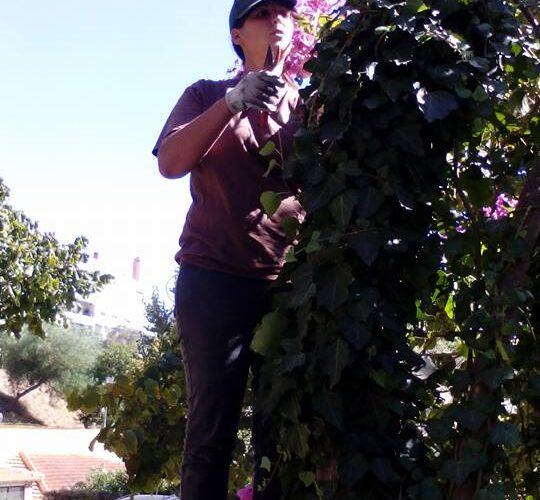 manutencao-de-jardins (9)